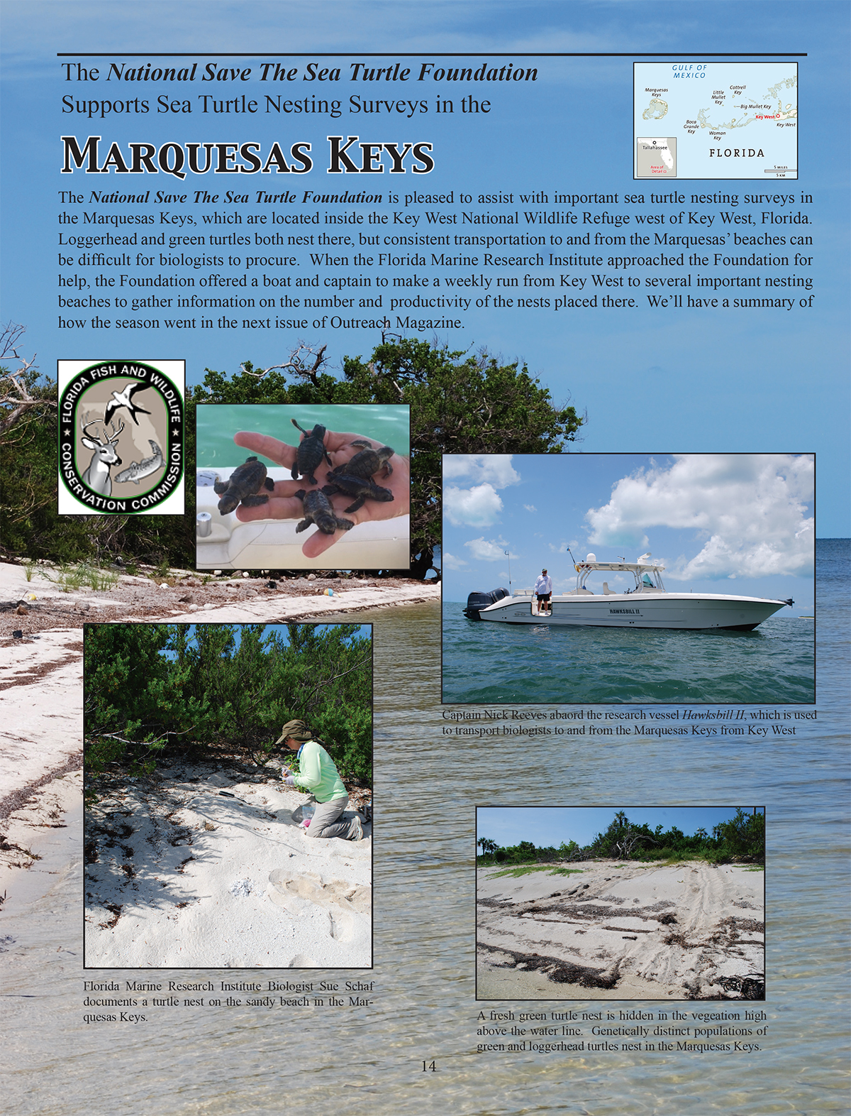 supports sea turtle nesting surveys in the marquesas keys