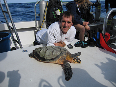 save hawksbill sea turtle
