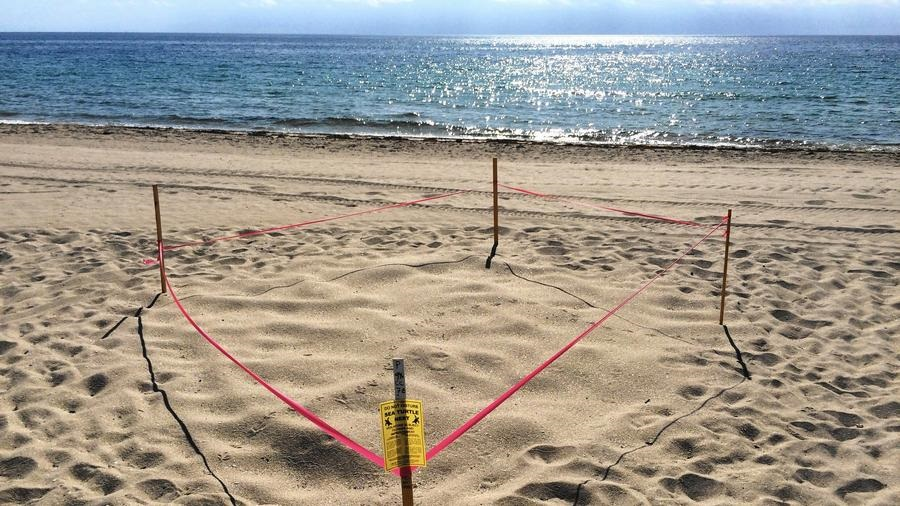 Pembroke Pines Students Adopt A Sea Turtle Nest